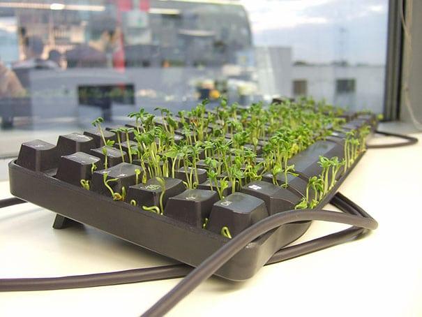 ростки в клавиатуре