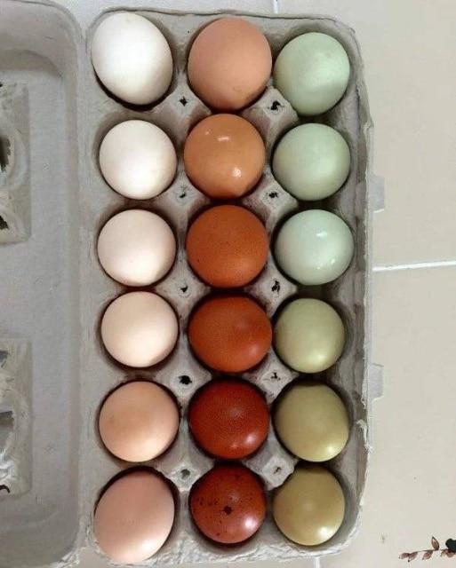 цветные яйца