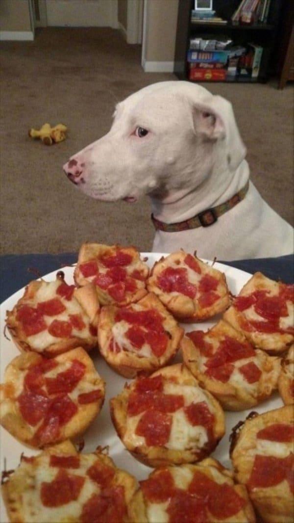 собака и бутерброды