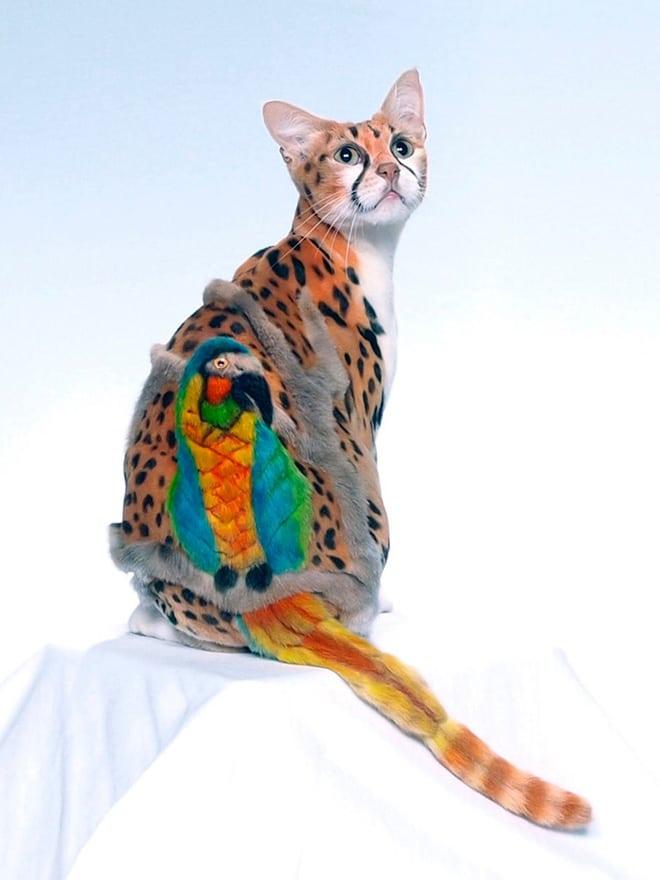 кот со стрижкой