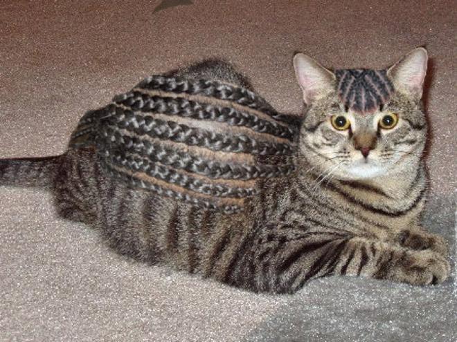кот с косичками