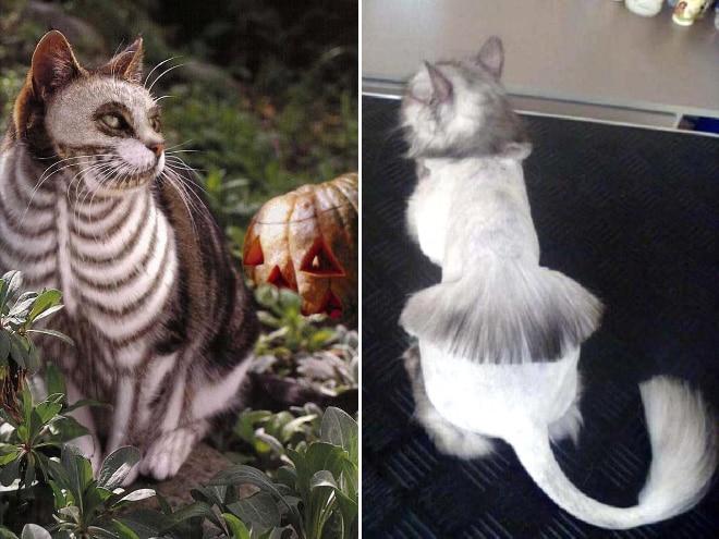 коты после стрижки