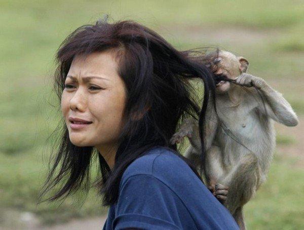 мартышка ест волосы девушки