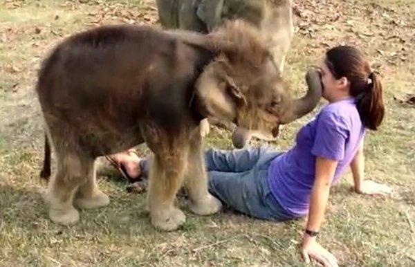 слоненок и девушка