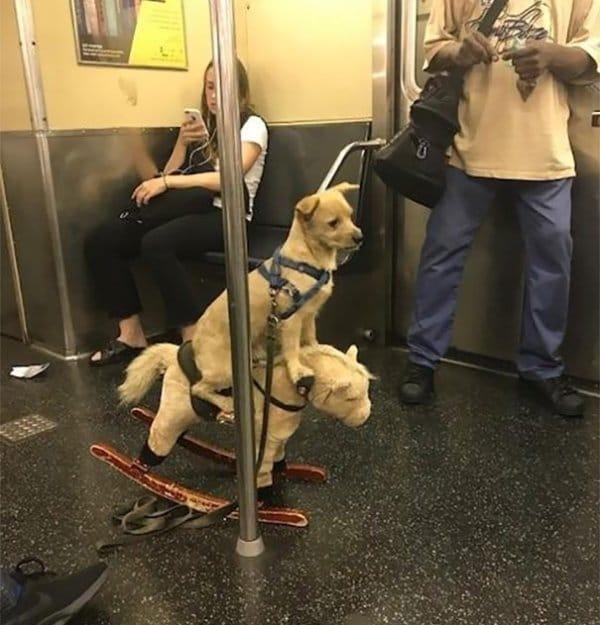собака на игрушечной лошадке в метро