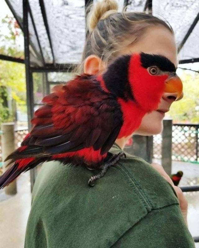 девушка и попугай