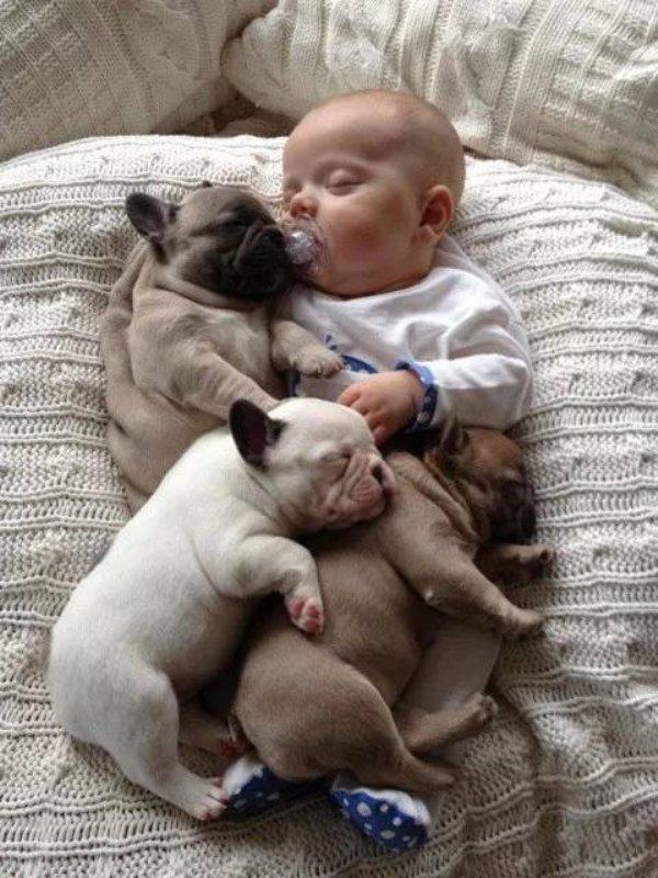 ребенок и три щенка спят вместе