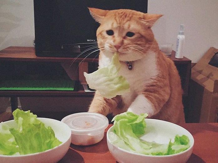 рыжий кот ест капусту