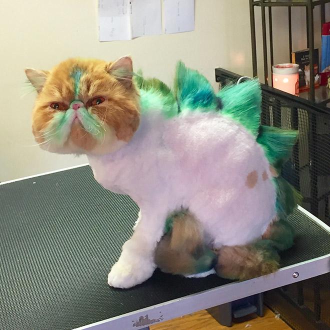 кот с цветной шерстью
