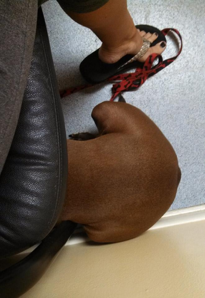 пес спрятался под диваном