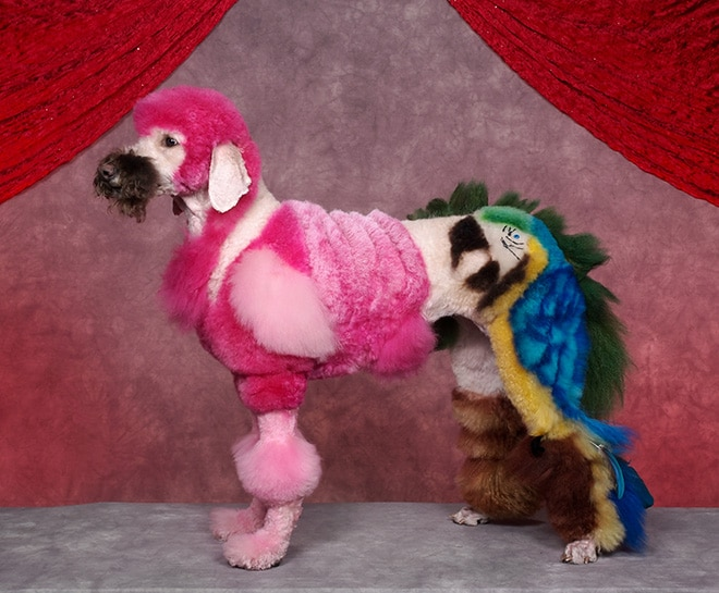 пес с попугаем из шерсти