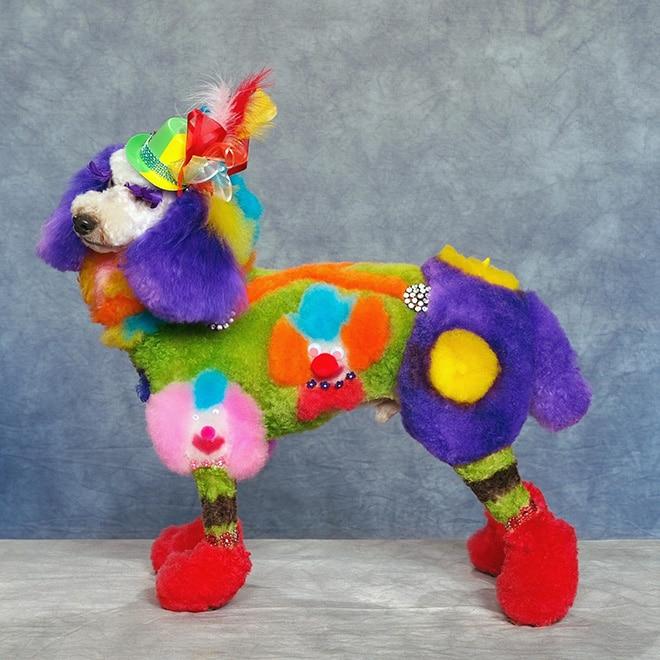 цветная собака