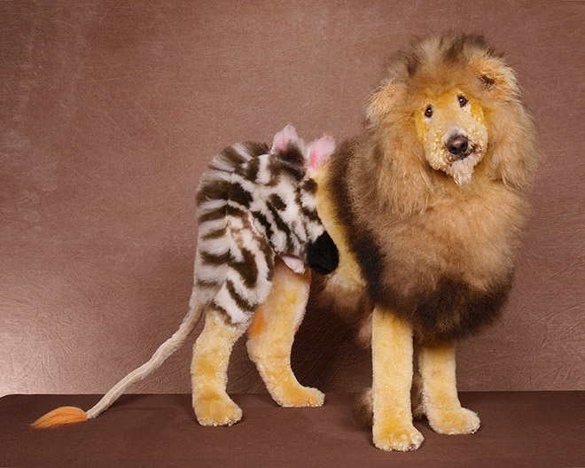 собака в образе льва