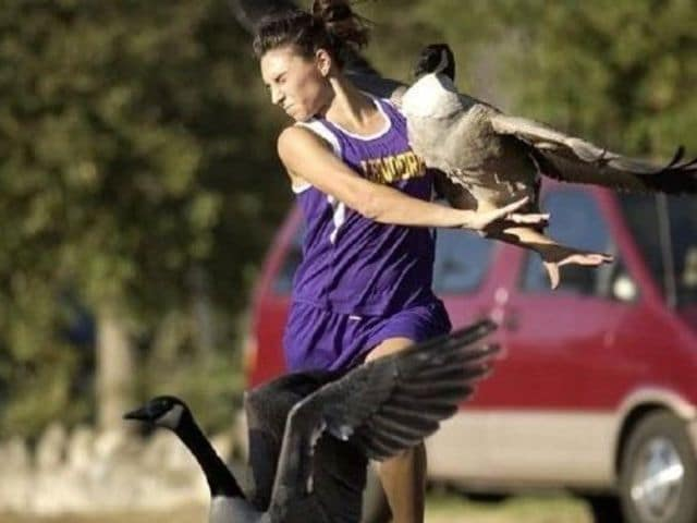 девушка и утки