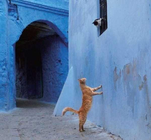 рыжий кот смотри на кошку в окне