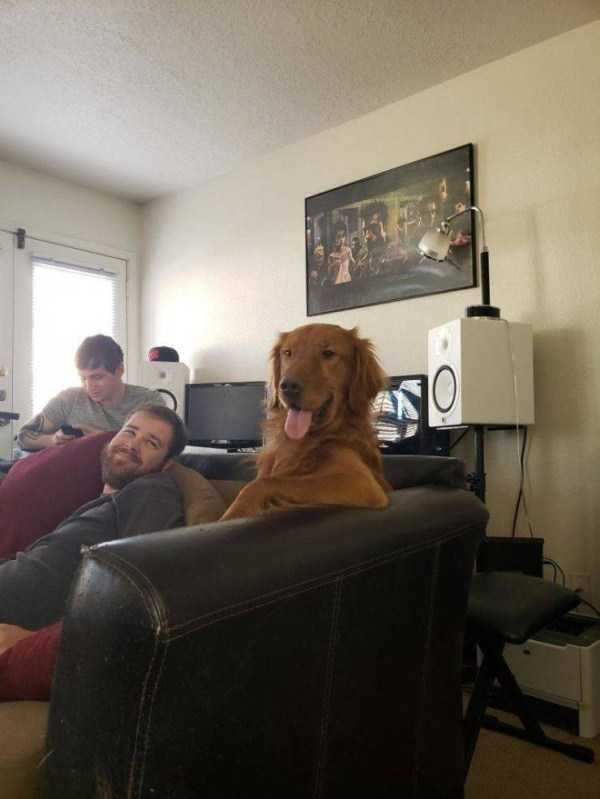 собака сидит на диване с хозяином