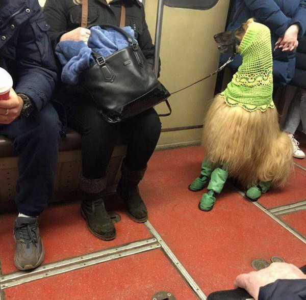 собака на поводке в метро