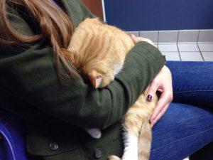 рыжий кот на руках у хозяйки