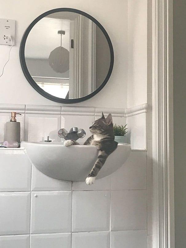 кот спит в раковине