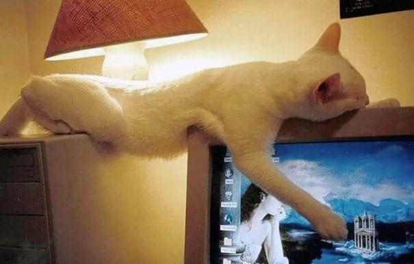белый кот спит на ноутбуке