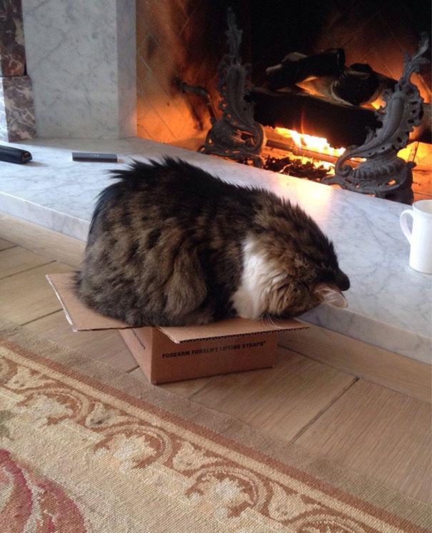 полосатый кот в маленькой коробке