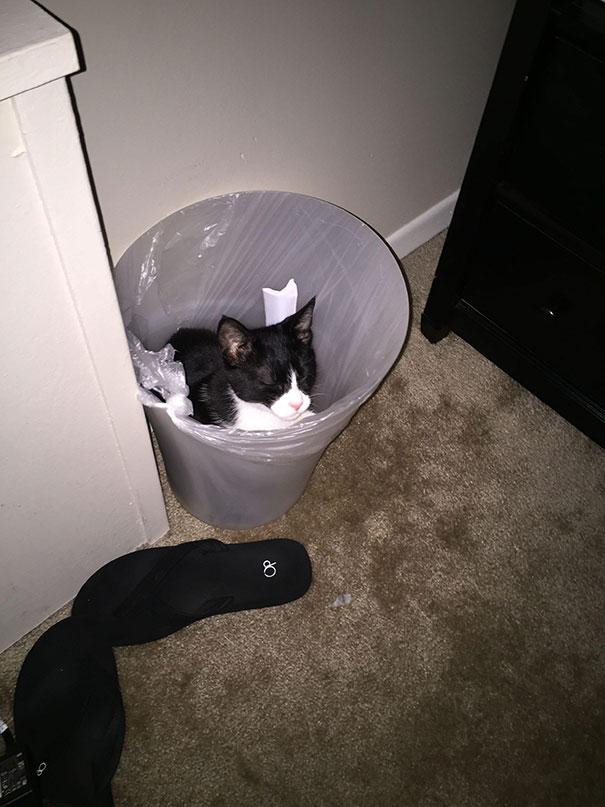 черно-белый кот в ведре