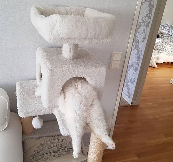белый кот спит в домике