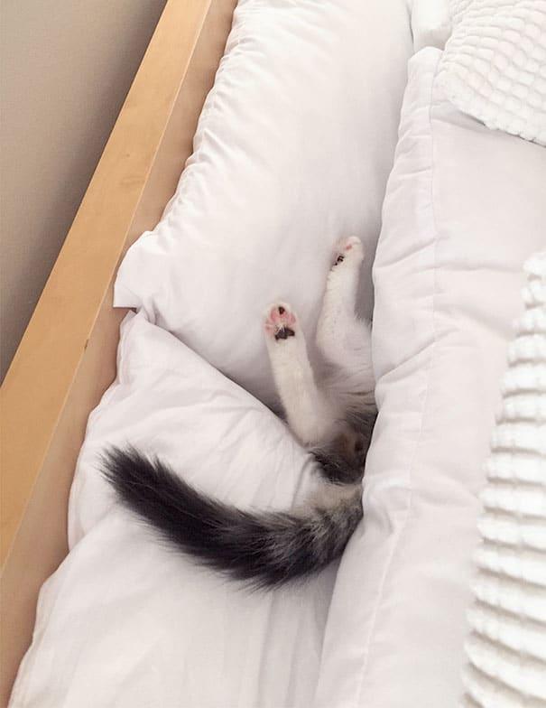 кот спит под одеялом на кровати