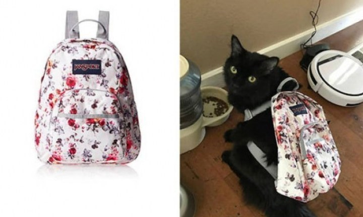 портфель для кота