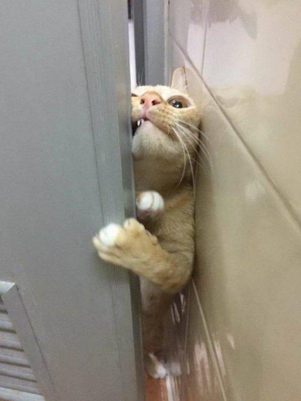 рыжий кот протискивается в дверь