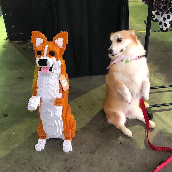 собака смотрит на свою фигурку из лего