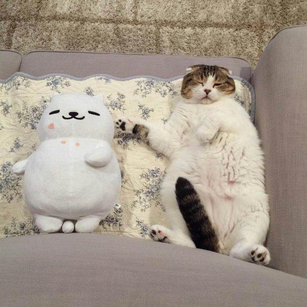 кот спит рядом с игрушкой