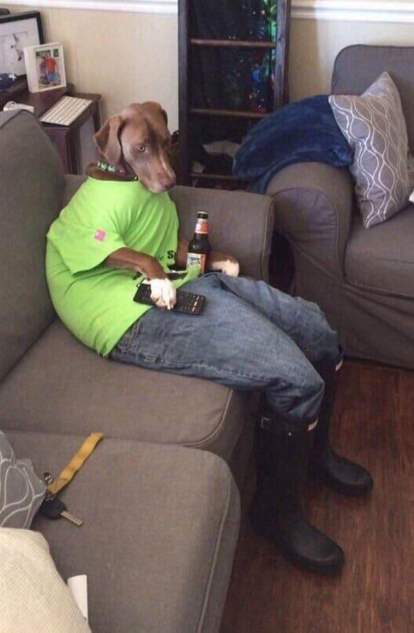 собака на диване с пультом и пивом