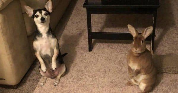 собака и кролик