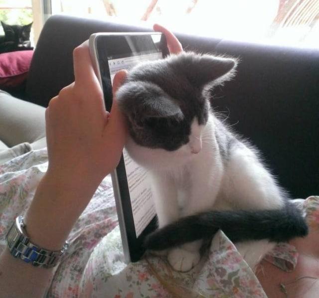 котенок не дает читать книгу