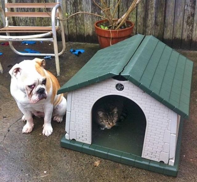 кот занял собачью будку