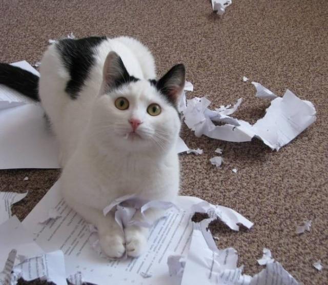 кот порвал бумагу