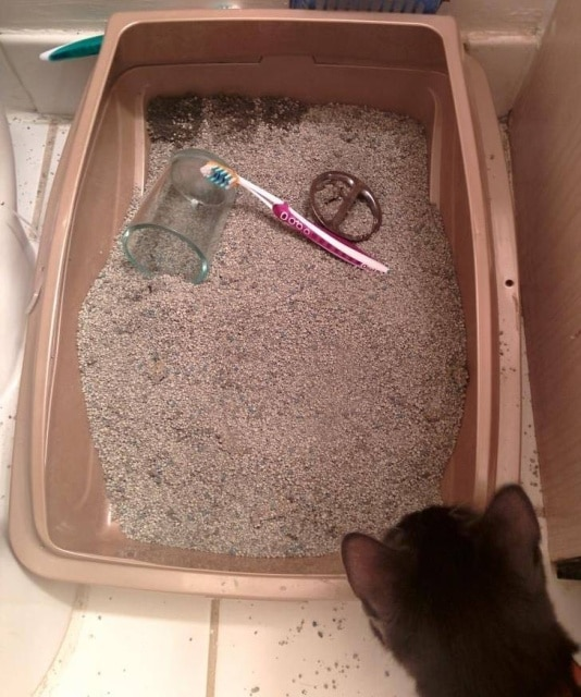 кот уронил зубную щетку в лоток