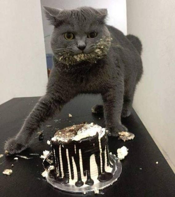кот испортил торт