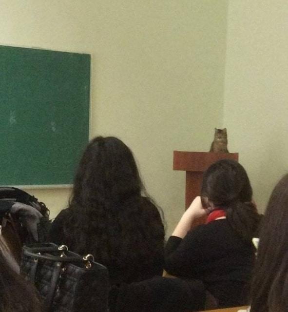 кот ведет лекцию