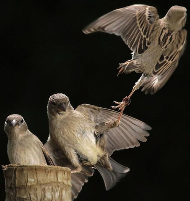 забавные птицы