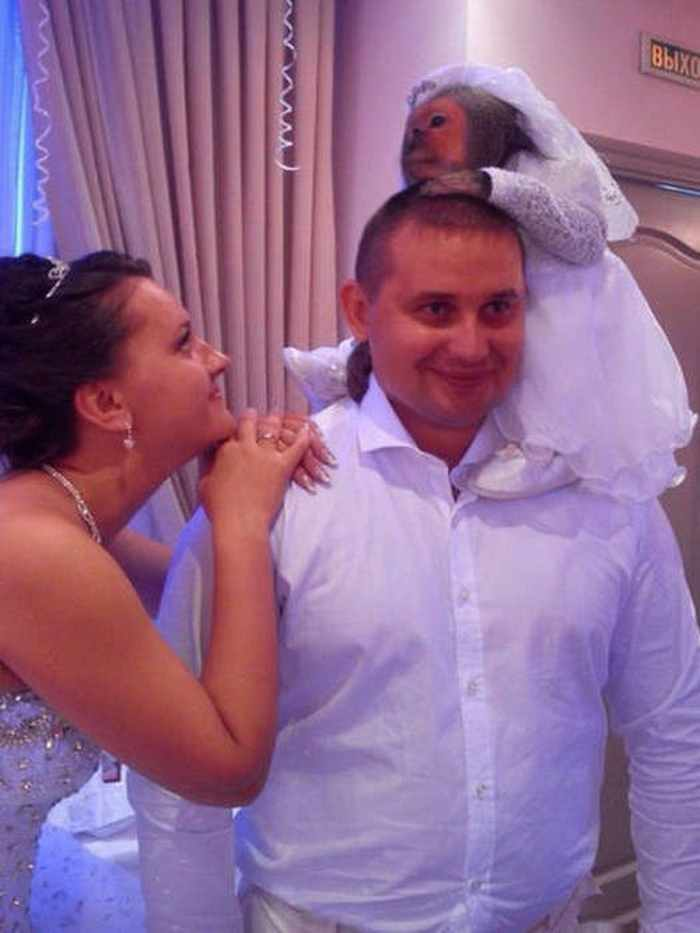 обезьяна на свадьбе
