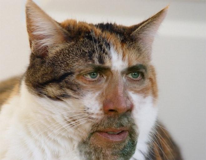 кот с лицом актера николаса кейджа