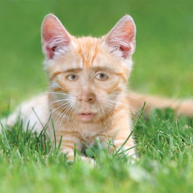 рыжий котенок с лицом николаса кейджа