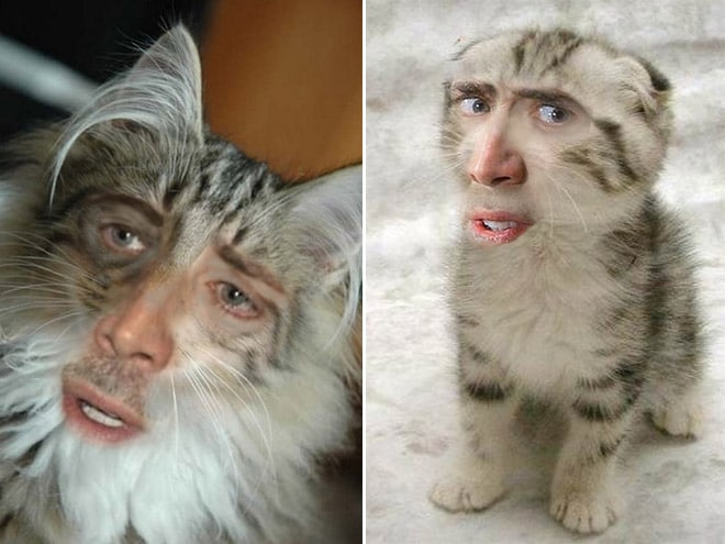 коты с лицом кейджа
