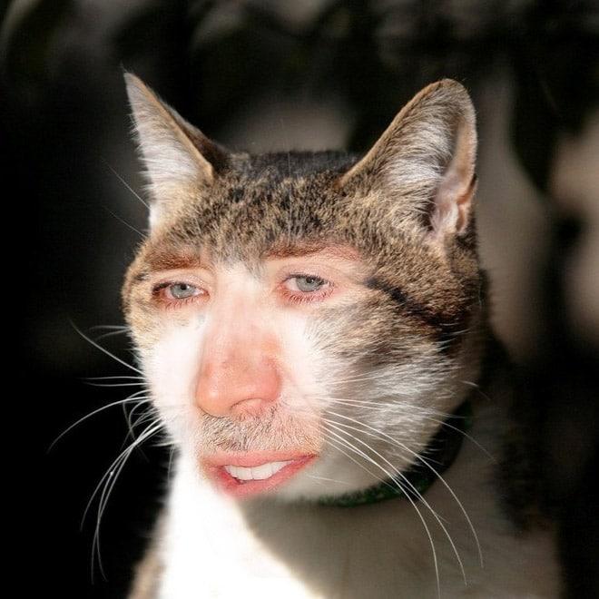 кот с лицом актера николаса кейджа рис 2