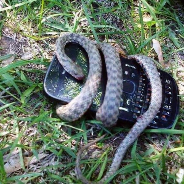 змея обвилась вокруг телефона