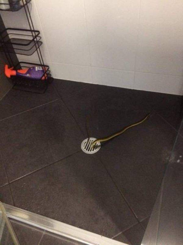 змея в ванной комнате