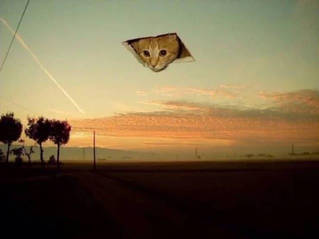 кот в небе