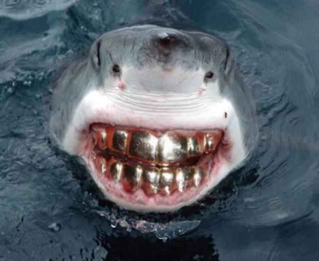 акула с золотыми зубами